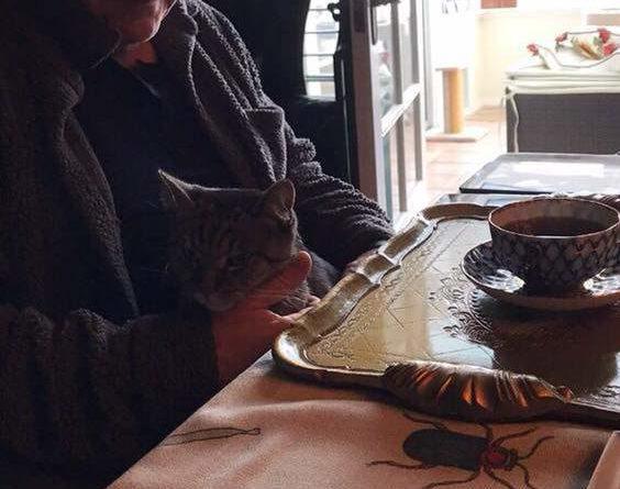 Sir Anthony Hopkins és a cicája