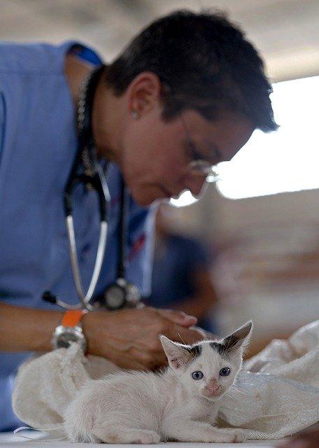 Már 3 hónapos kortól ivartalanítható a macska