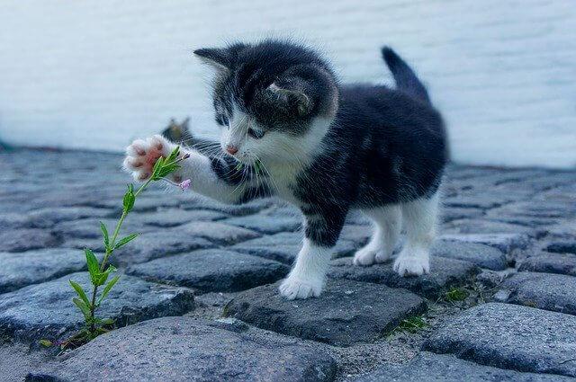 Kölyök macska növénnyel játszik