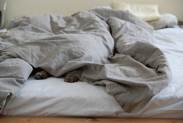 Lusta cica a takaró alatt