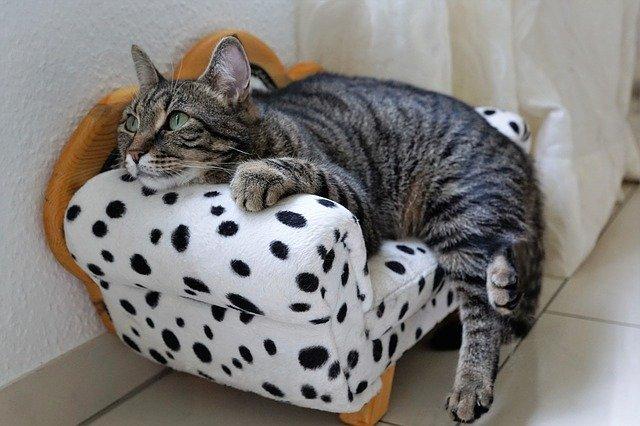 Cica a saját kanapéján