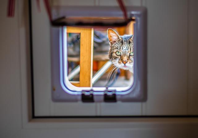 Macskaajtón kukucskáló cica