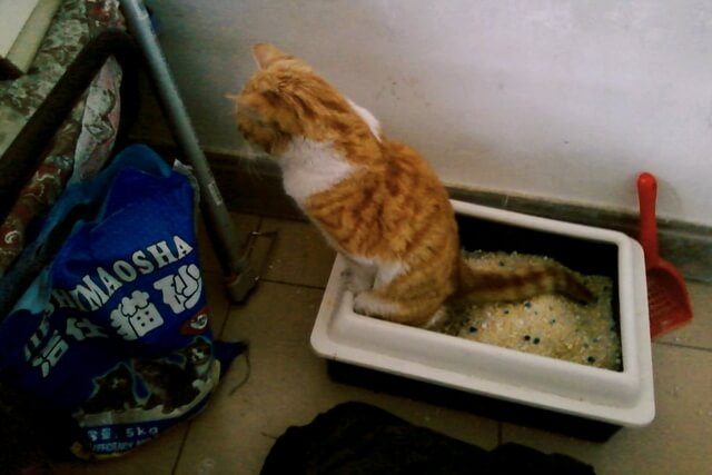 Macska mosdó