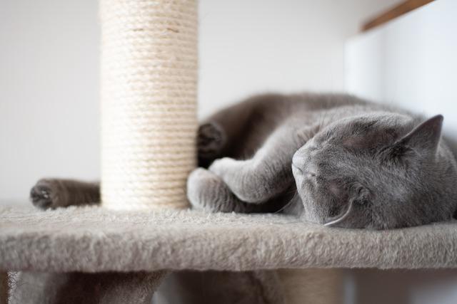 Macskabútor kaparófával
