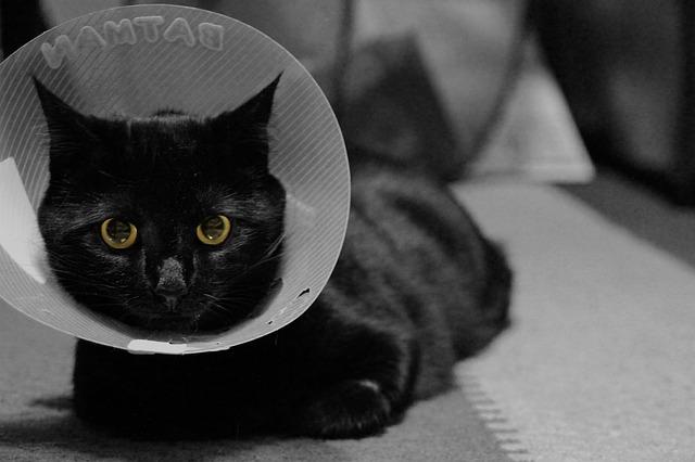 Macska gallér a műtét utánra