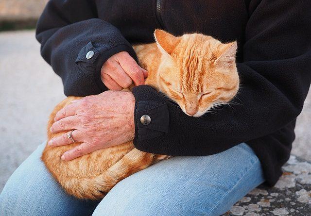 Macska a gazdi ölében