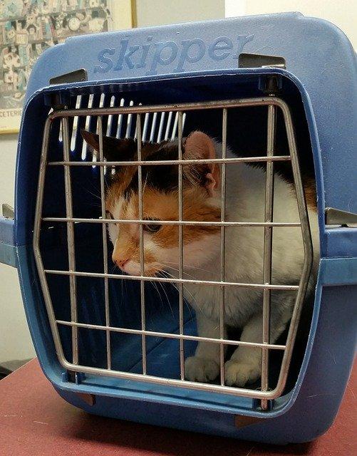 Macska szállító box