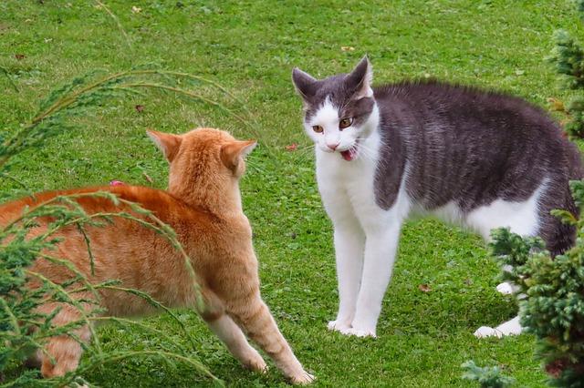 Agresszív macskák