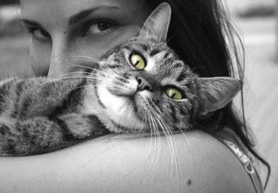 Boldog macska viselkedése