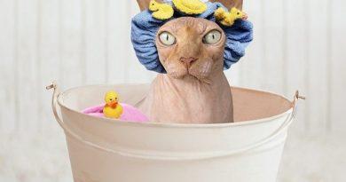 Cica fürdetés – így kezdj neki