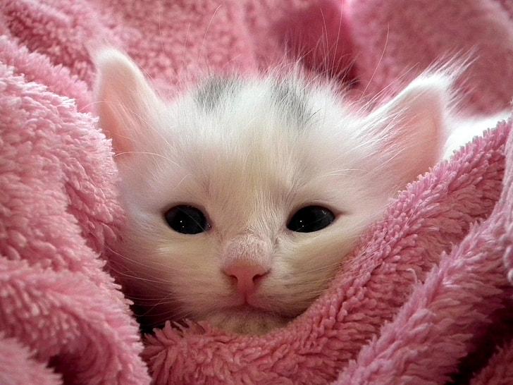 Aranyos kiscica puha törölközőbe csomagolva