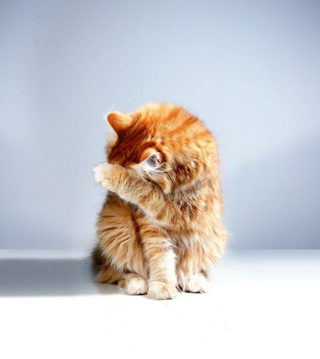Cica el akar bújni