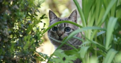 Így tarthatod távol a macskát a kerttől növények segítségével!