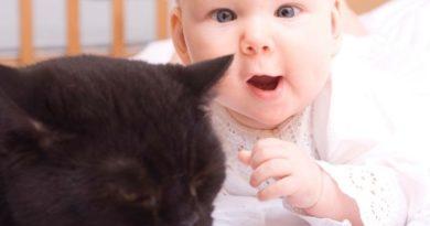 Kisbaba és cica: hogyan szoktasd össze őket?